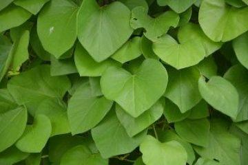leaves-2469514_640